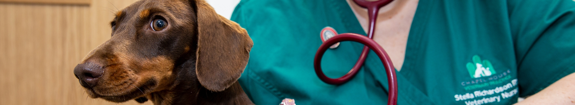 Diagnosing and treating parasites in your pet